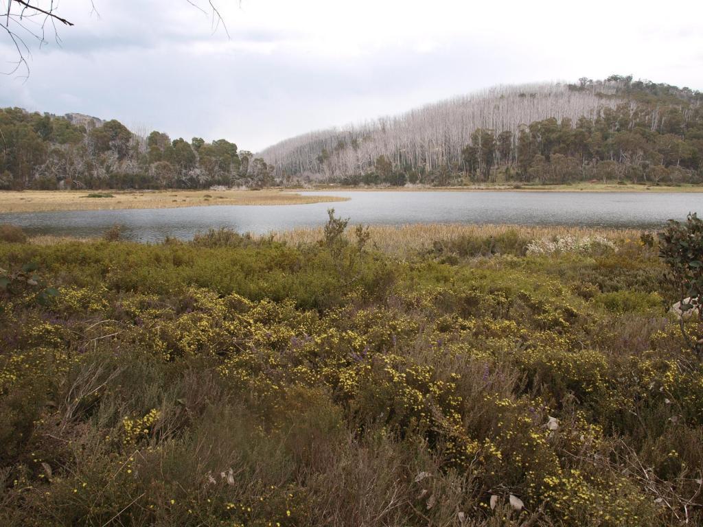Mt20BuffaloSkipworth20041a.jpg